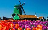 htLoca-Holland-4